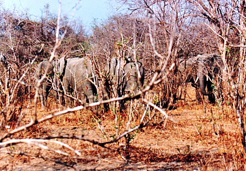 elephants in queen elizabeth national park in uganda