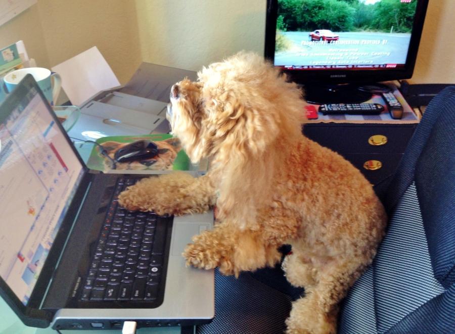 bumble at laptop 2
