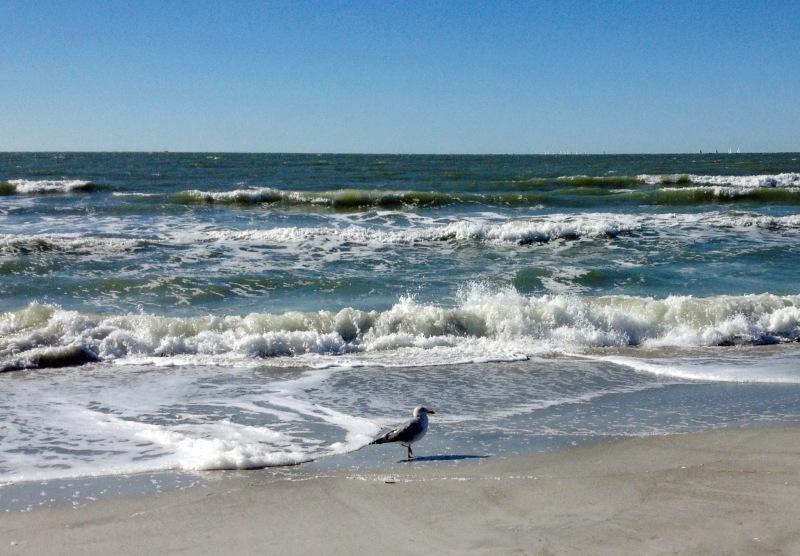 bird on the winter beach