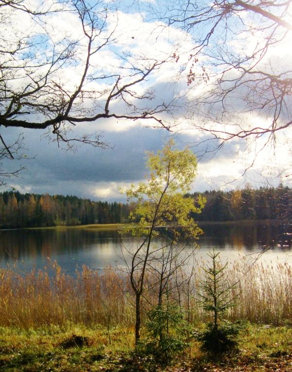 lake in October (3)