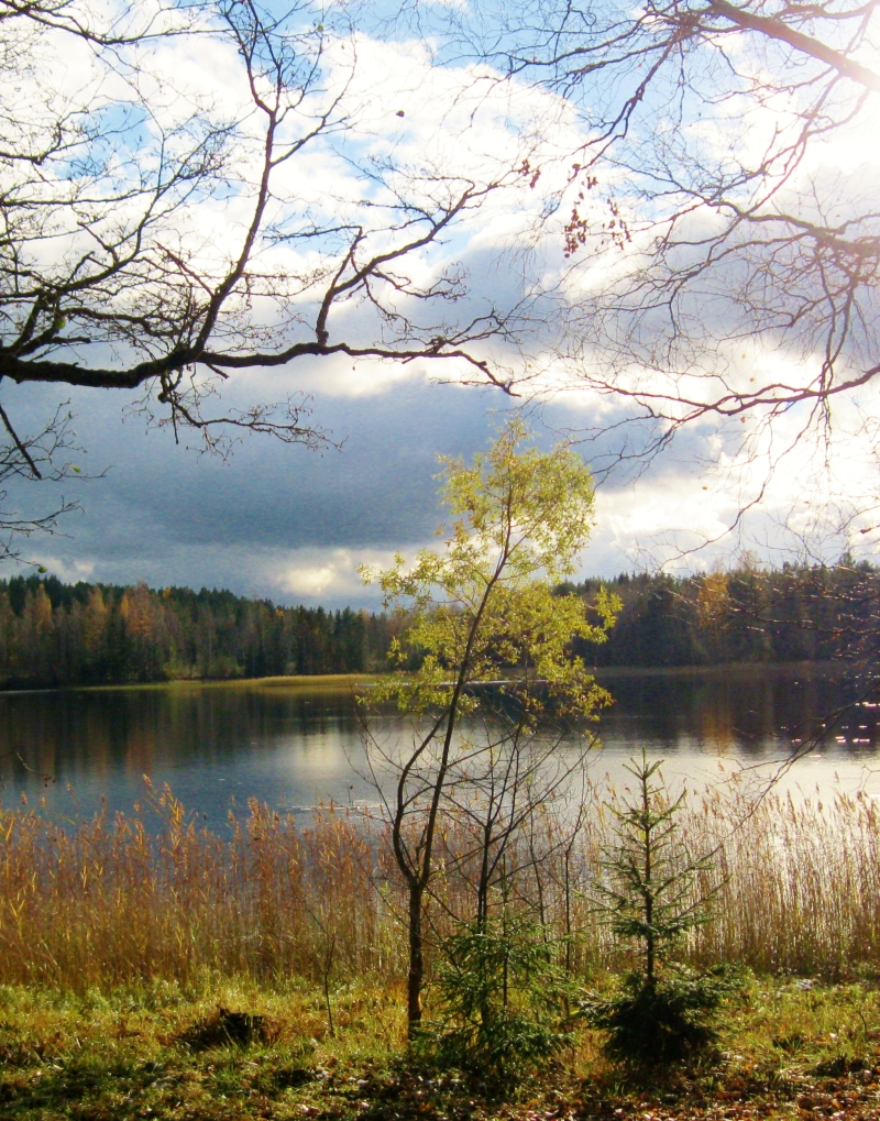 lake in October (3)