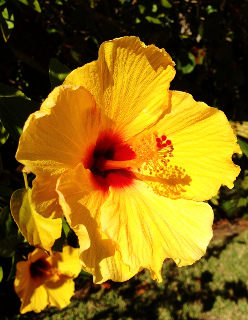 winter beach hibiscus