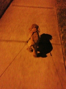 bumble walking mom