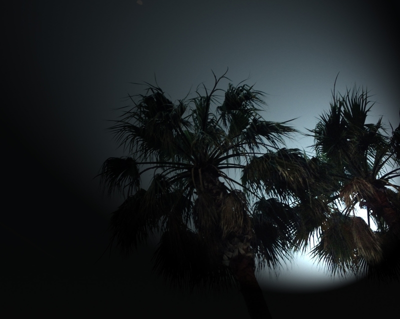 palms lighted up 2 (3)