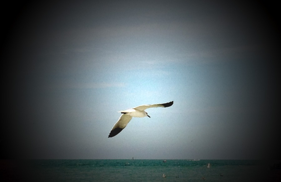 bird flying edited
