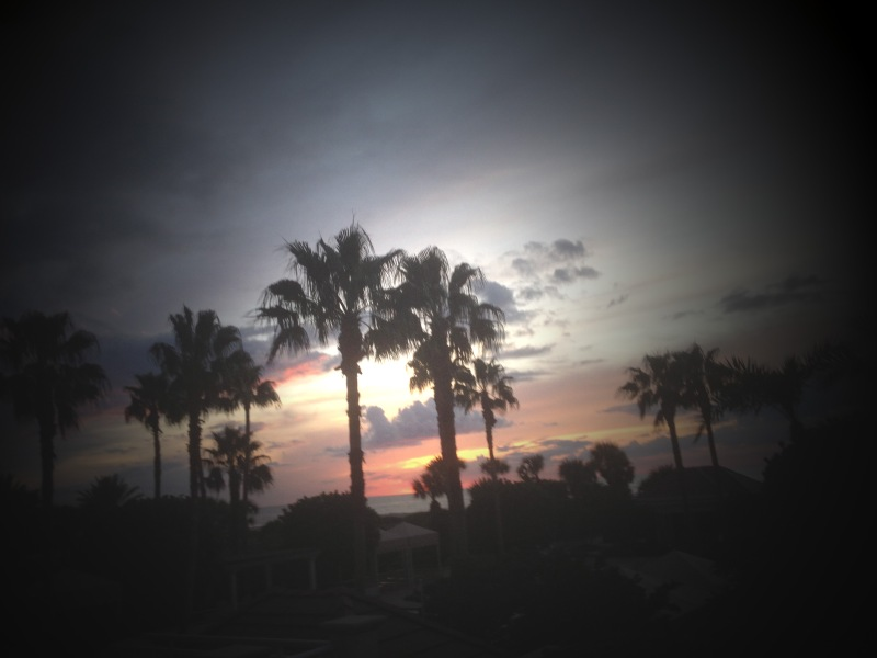 Palms at sunset edited 5