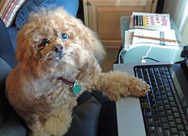 Bumble borrowing laptop ed
