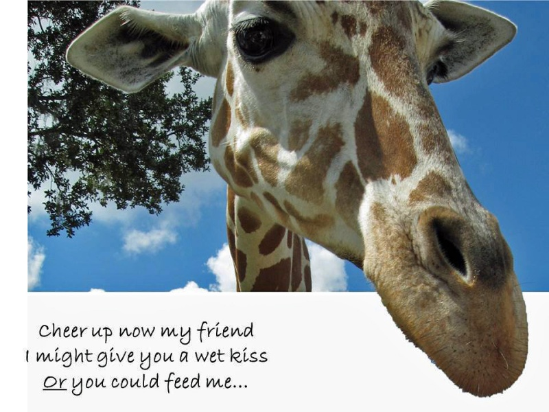giraffe haiku ed