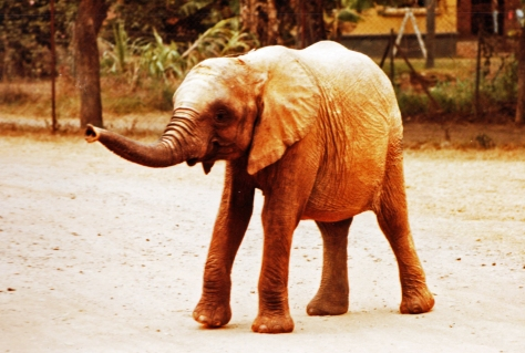 little elephant near the lodge