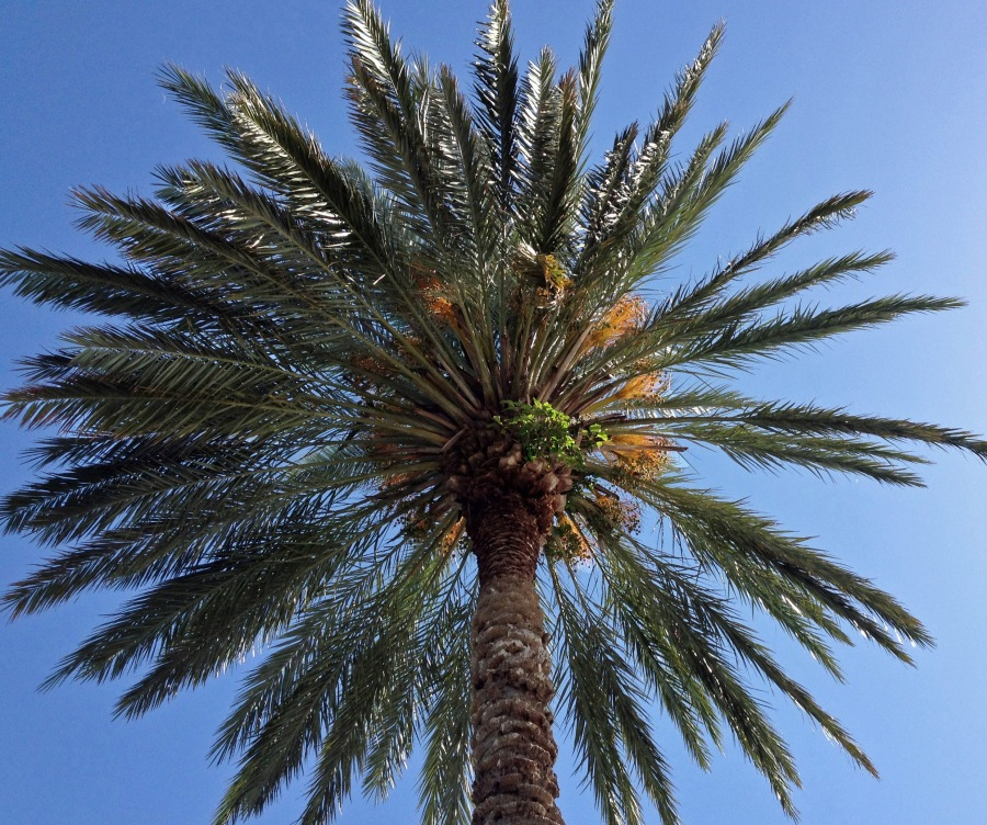palm in the sun ed_edited-1