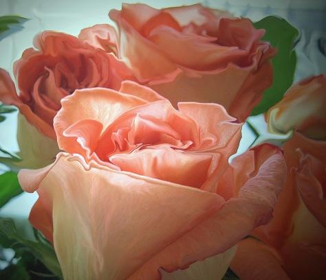 roses ed_edited-3 (2)_edited-1
