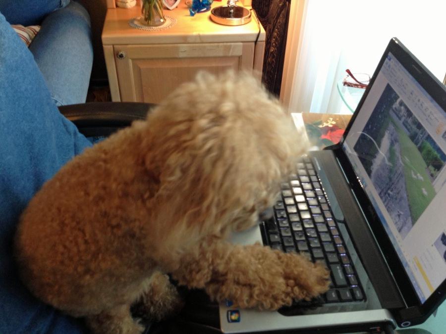 new bumble laptop5 ed