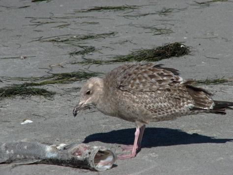 ocean gull bird edx