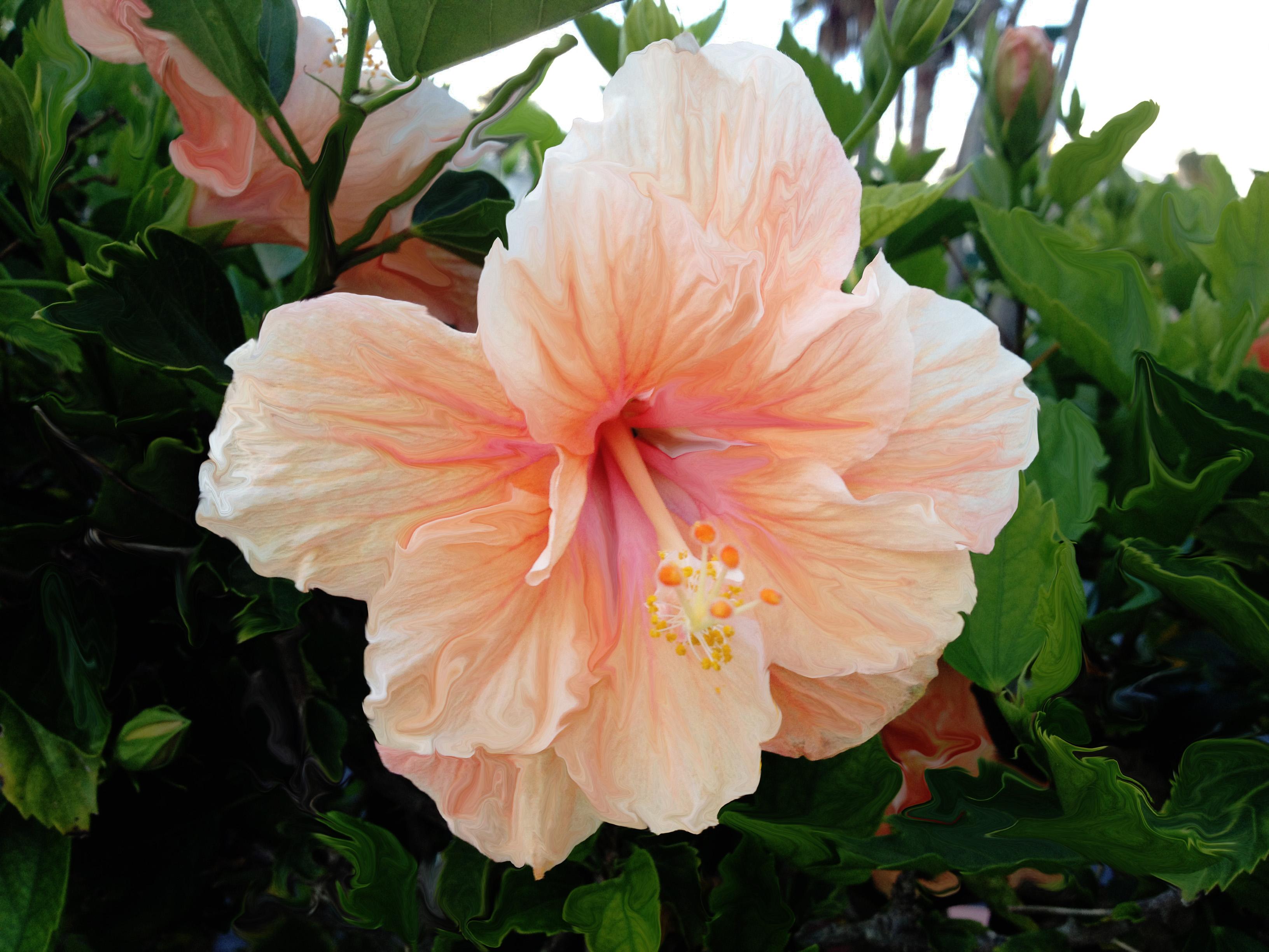 Hibiscus Tiny Lessons Blog