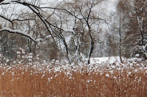 winter lake 3 ed