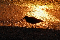 Bird on golden beach