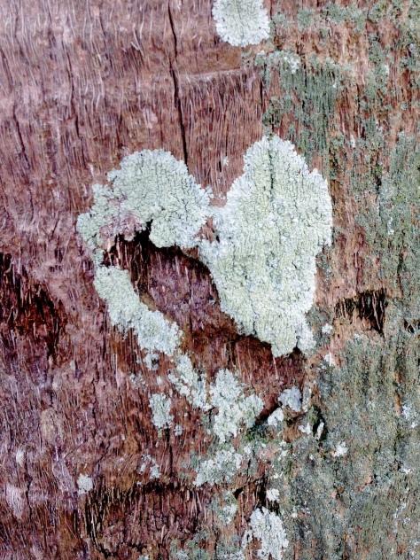 Broken heart in a tree