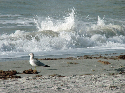 gull on the beach edx