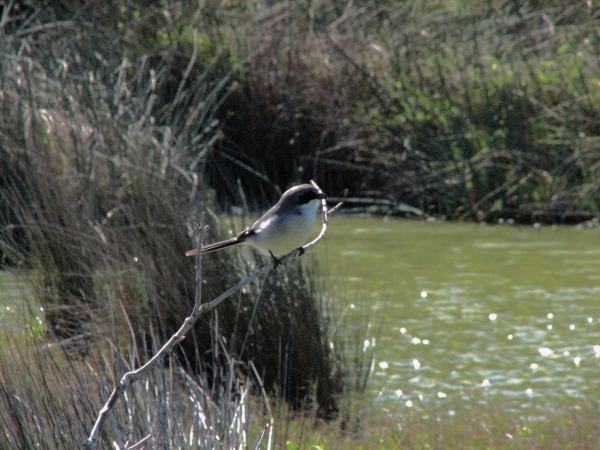 little bird 3 edx