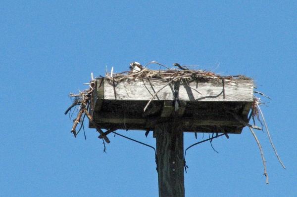 osprey alarm 1