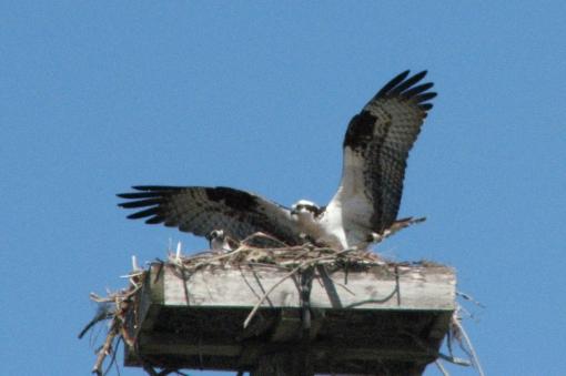 osprey alarm 10