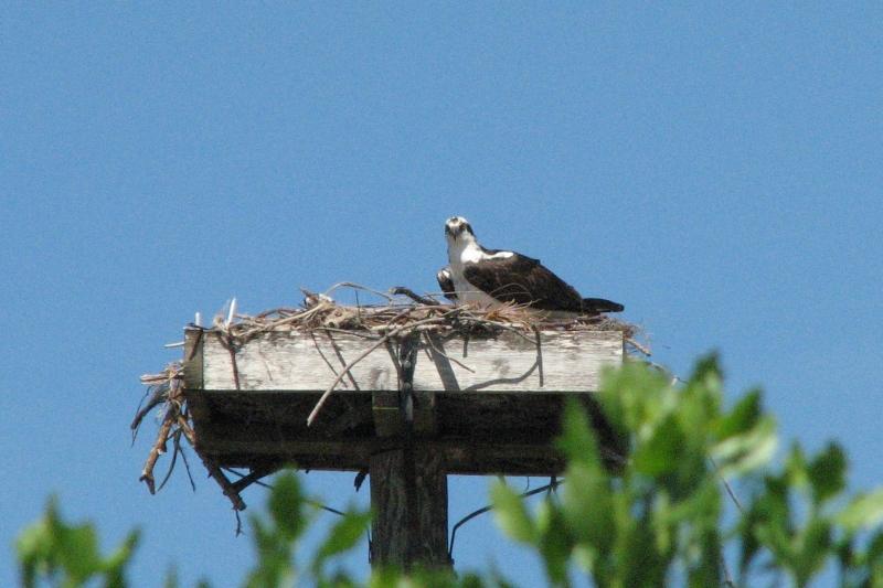 osprey alarm 12
