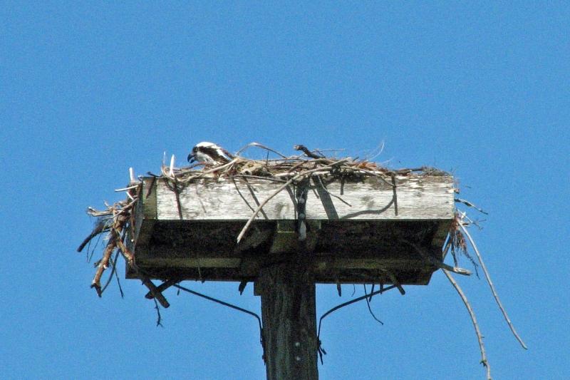 osprey alarm 2