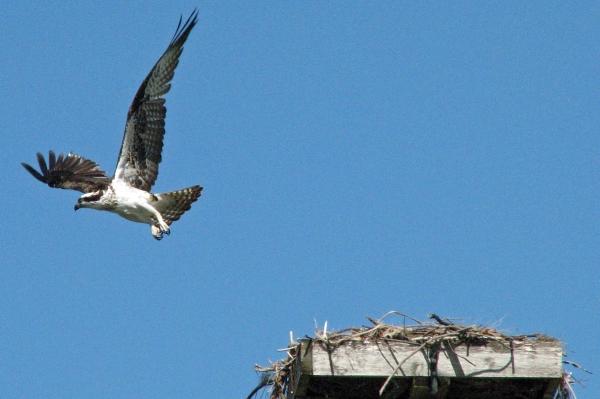 osprey alarm 3