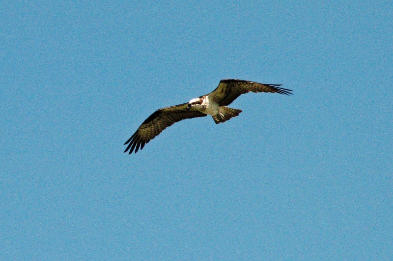 osprey alarm 4