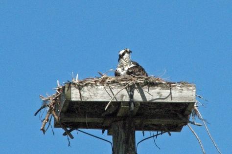 osprey alarm 6