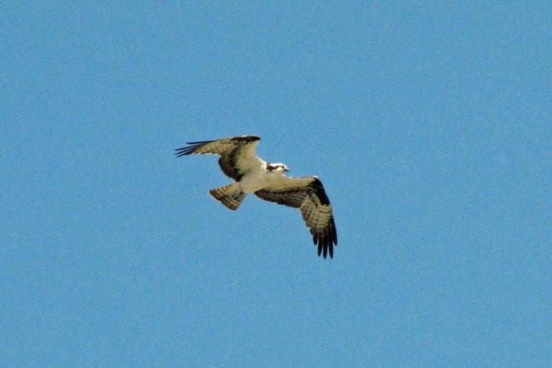 osprey alarm 7b