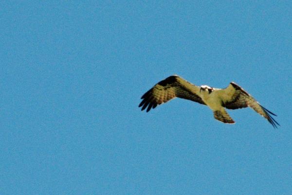 osprey alarm 9