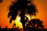 Palms on the beach walk