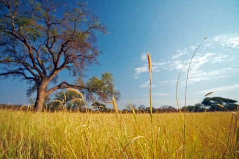 Sky and grass Africa
