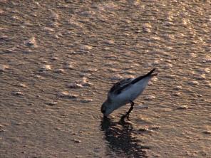 ...where little birds find food