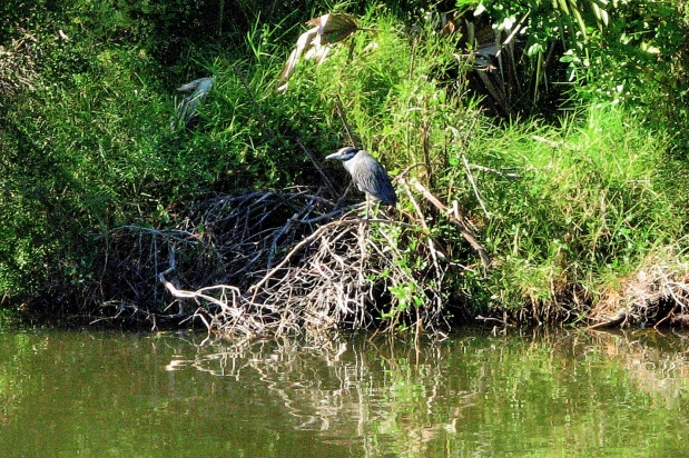 we could spot a small heron