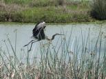 ...where the blue herons live