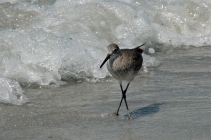 or watch a sand piper patrol the surf