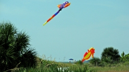 Flying kites is for land crabs...