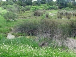 The marsh has flowers too...
