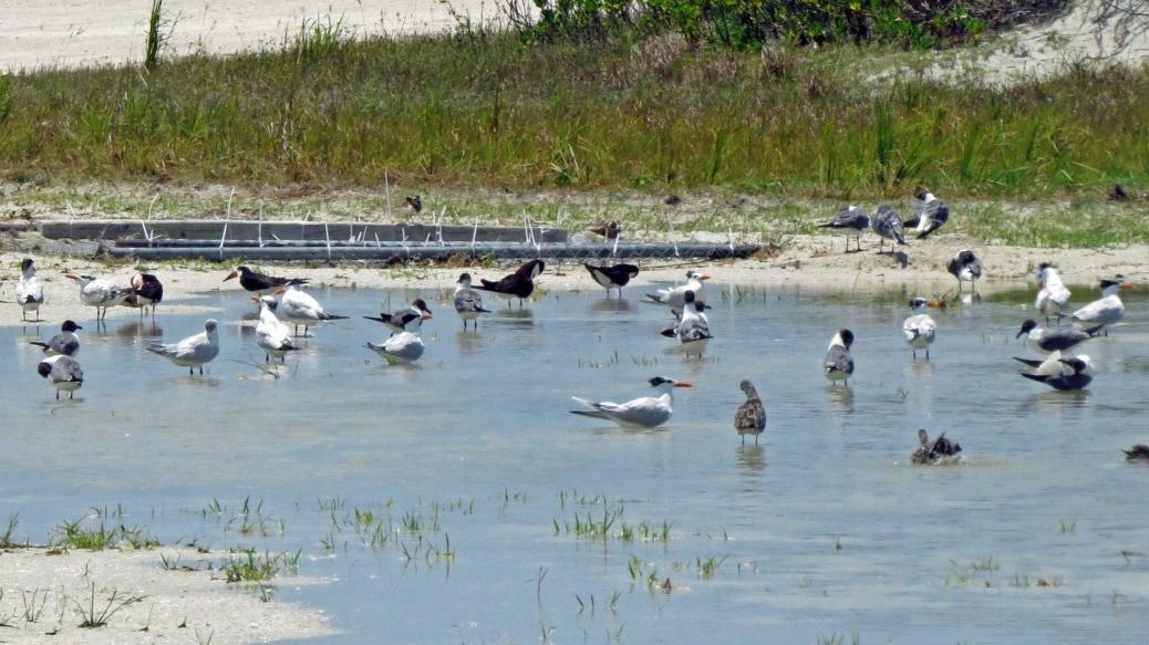 birds bathing in fresh water
