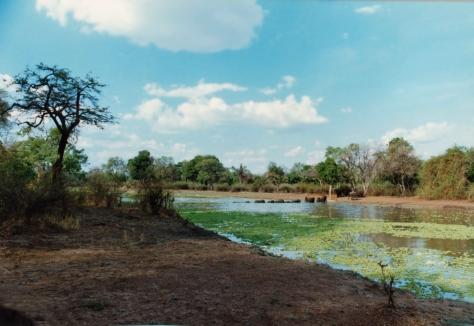 Elephants crossing Luangwa River Zambia safari