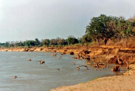 Luangwa River Zambia