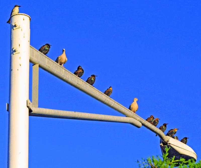 birds at sunrise all varieties 3