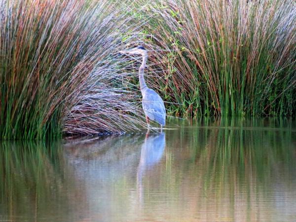 blue heron at sunrise2_tonemapped