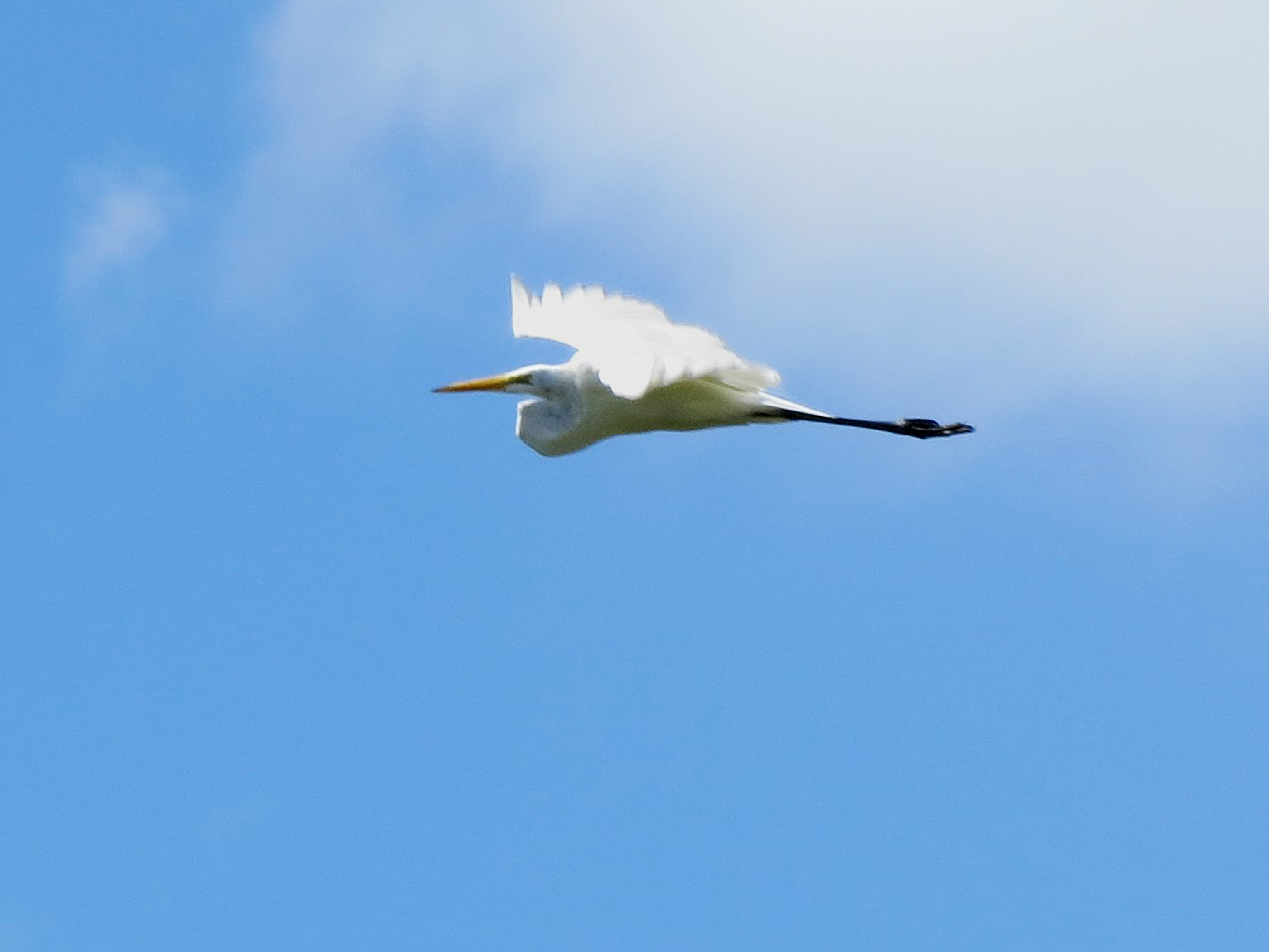 Egret | TINY LESSONS BLOG