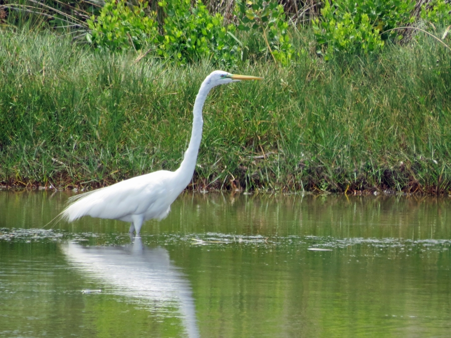 Egret in the nature reserve Sand Key Clearwater