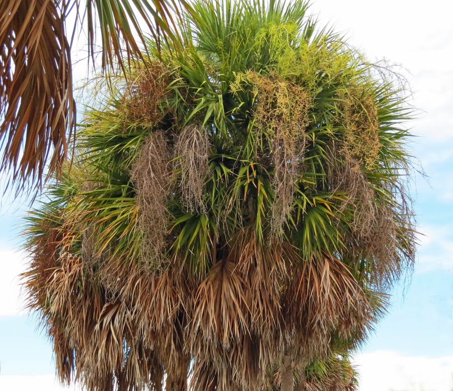 HS palm hair extensions b