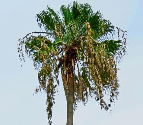 flowering palm