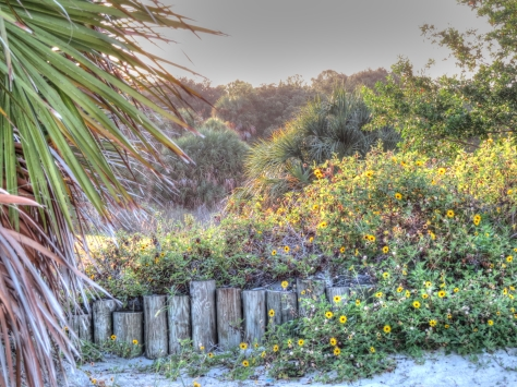 nature reserve at sunset_tonemapped